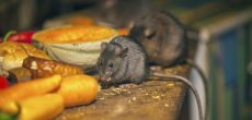 The Secret To Keeping Mice Out Of Your RV