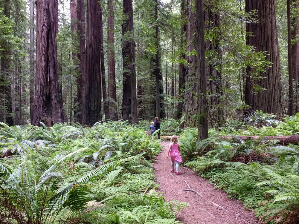 hiking-redwoods-state-park