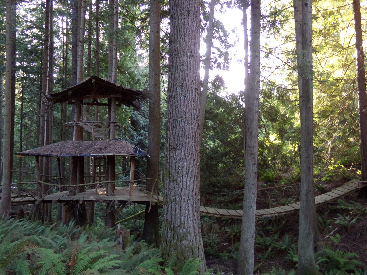 Treehouse with a suspension bridge