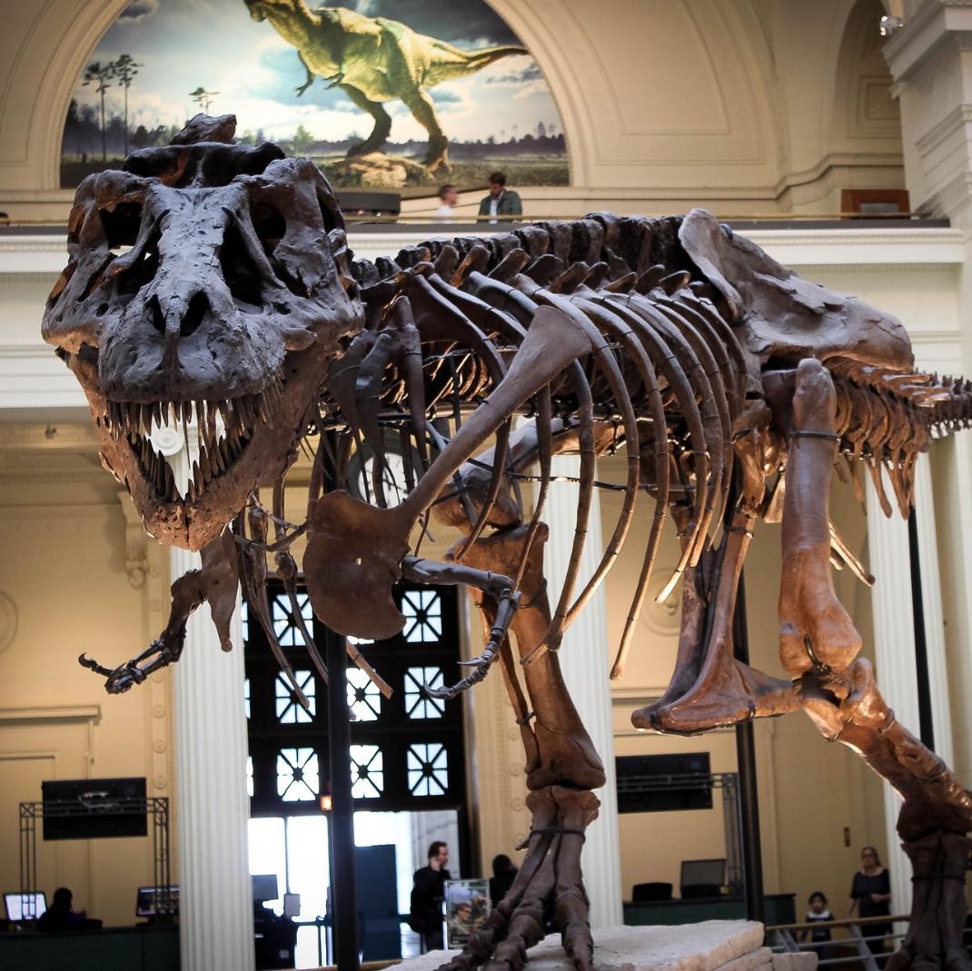 Chicago museum