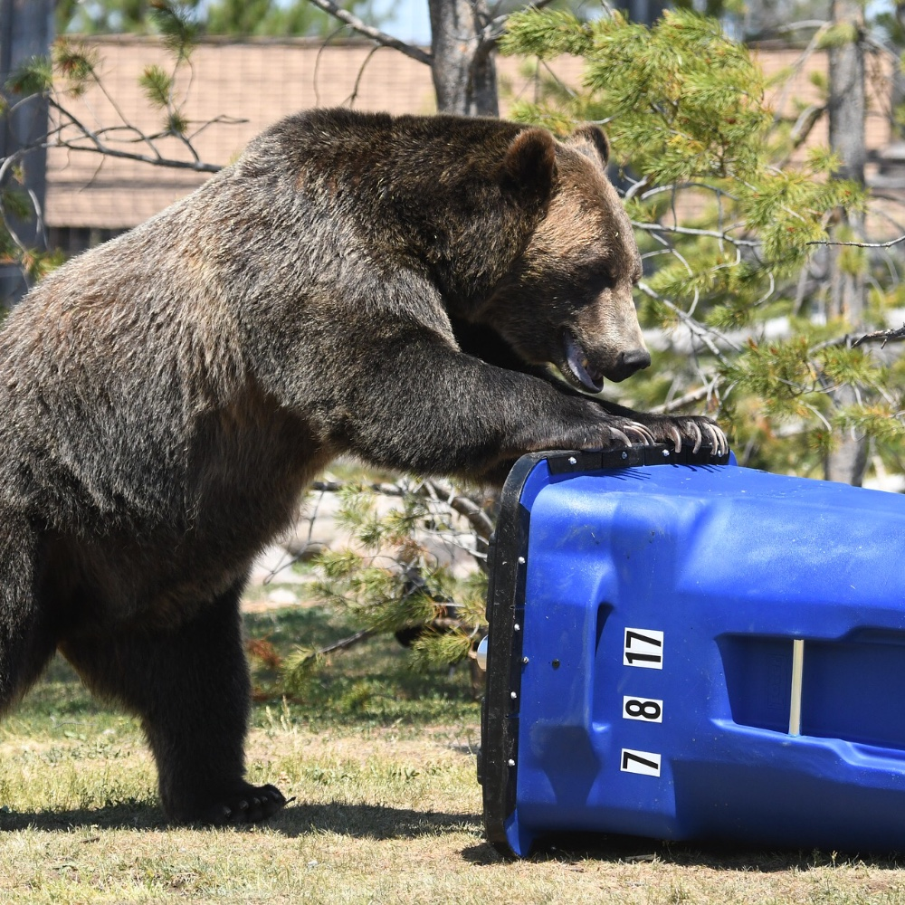 Quick Tips for Trash Removal
