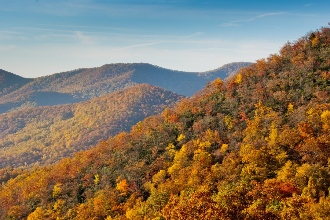 Fall colors begin at the highest elevations in early October, and work their way down to the lower elevations in early November.