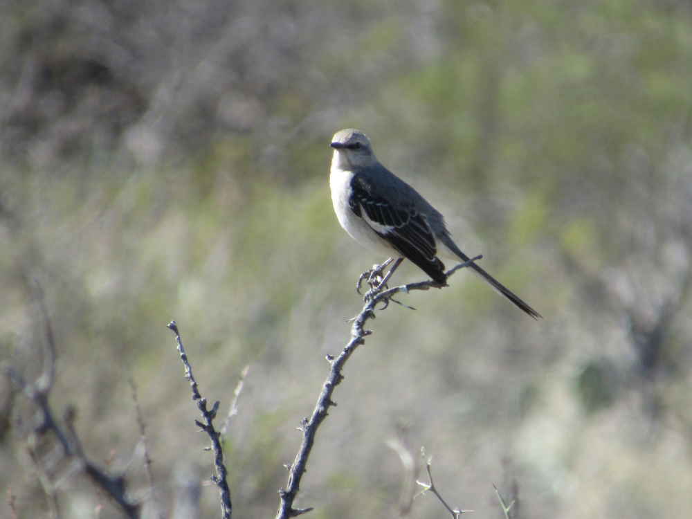 big-bend-bird-watching
