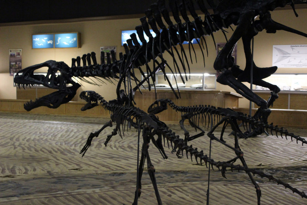 Tumbler Ridge Dinosaur Discovery Gallery, photo courtesy of Ashley Wiebe/flickr
