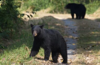 6 Things You Should Never Do If You Encounter A Bear