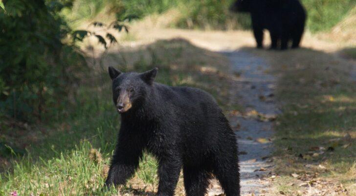 6 Things You Should Never Do If You Encounter A Bear