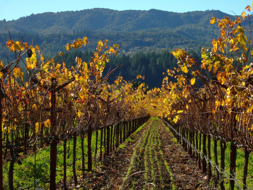 William Hill Estate Winery. Napa Valley. Photo by JTK 94131