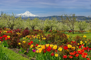 5 Towns In The Pacific Northwest To Visit This Spring