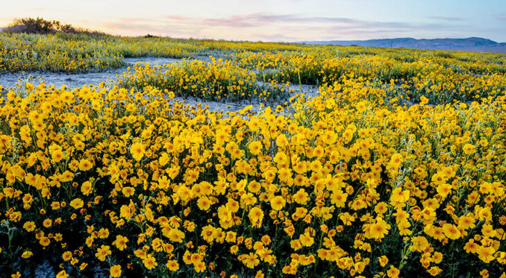 5 Places To Camp Near Gorgeous Fields Of Flowers