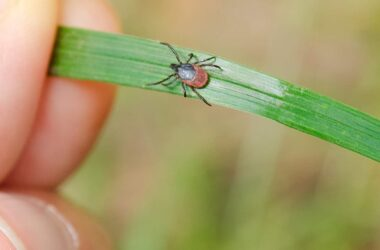 How To Prevent Tick Bites This Camping Season