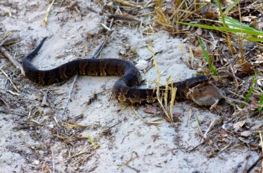Look Out For These Water Snakes In The Southeast