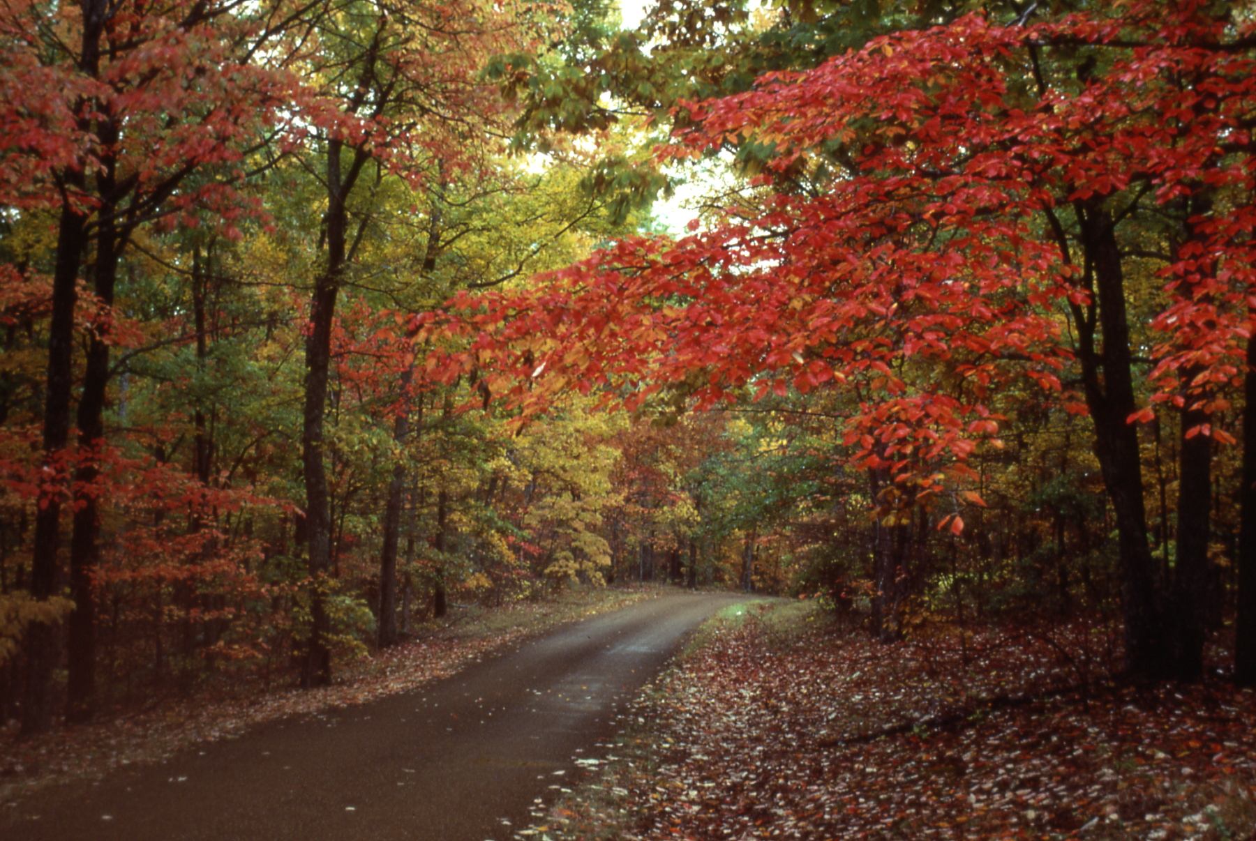 Natchez Trace Parkway, a scenic drive to see fall foliage. Photo by NPS