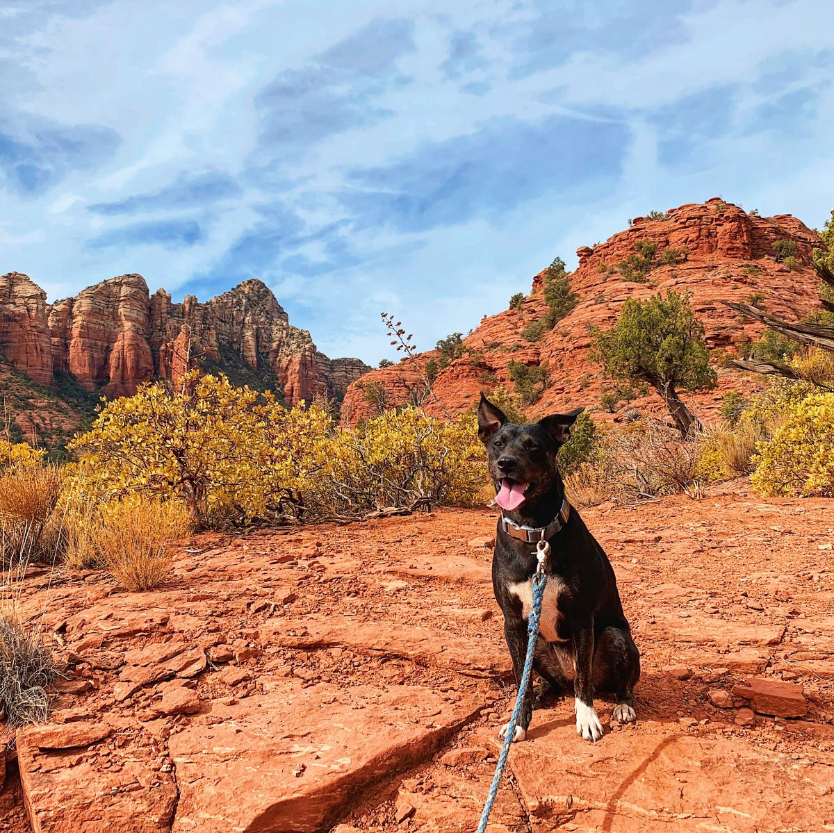 RVing with dogs - GPS tracker