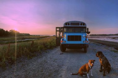 skoolie at sunset with dogs