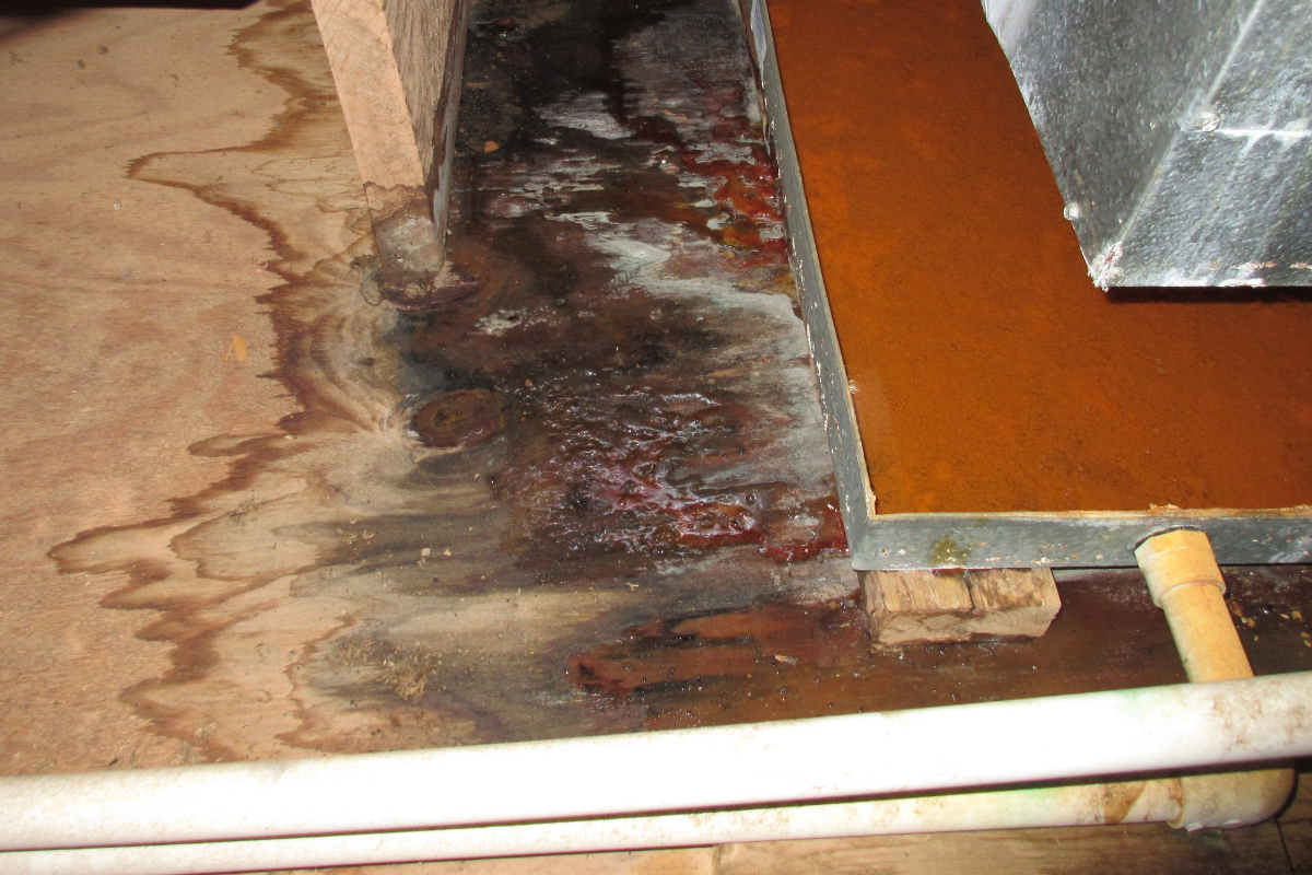 Water damaged wood near pipes