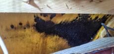black mold removal in RV